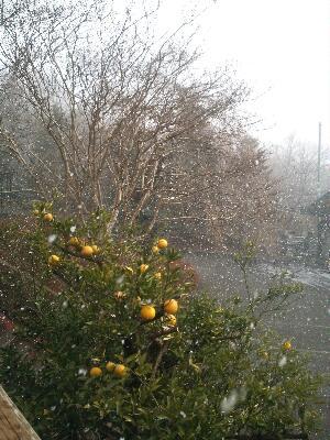 20130125とんとん雪
